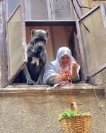 """10 معلومات عن كلب الدرب الأحمر """"كان كورسو الإيطالي"""" الذي أثار الجدل وأصبح نجم الفيس بوك 3 1/3/2018 - 11:45 ص"""